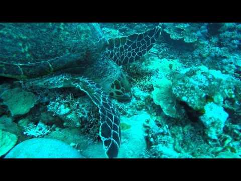 Scuba Diving - Laulau Beach, Saipan, CNMI