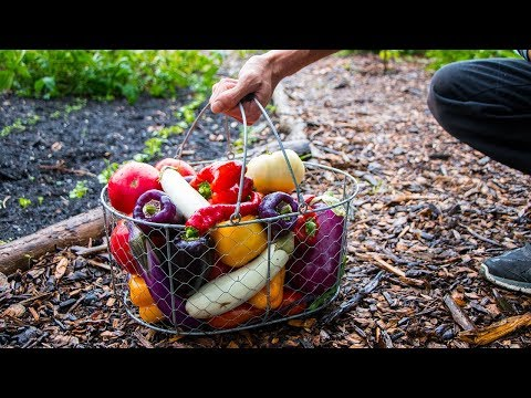 A Late Summer Garden Harvest FULL OF COLOR!