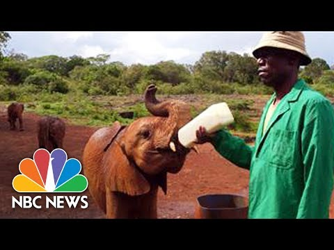 Woman Helping Lead Charge Against Elephant Tusk Poaching In Africa | Megyn Kelly | NBC News