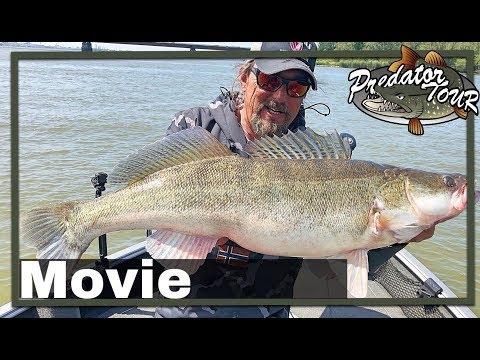 🎣 EUROPEAN PREDATOR FISHING COMPETITION 🎥  PredatorTour Netherlands 2019 | Pike Zander Perch Fishing
