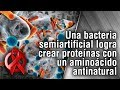 Una bacteria semiartificial logra crear proteínas con un aminoácido antinatural