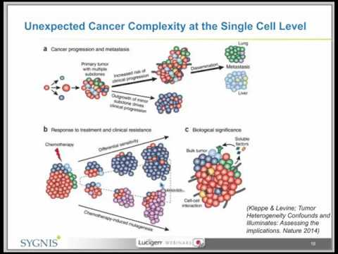 Eliminate Bias in Single Cell Whole Genome Amplification with the TruePrime™ System - Sygnis Webinar