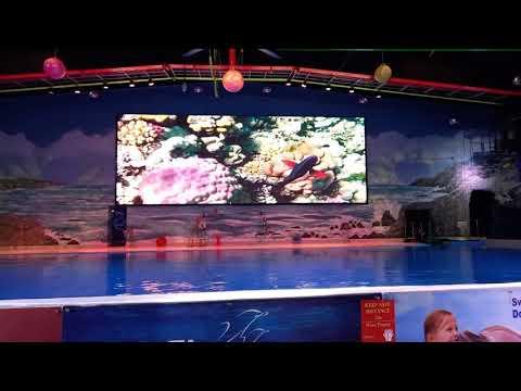 Dolphin Show at Dolphinarium Dubai at Creek Park Dubai with Rayyan 2021