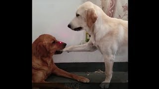animals🐶🐶🐶and humans funny videos🤣🐶😻 collections😂😊😂2019 #28
