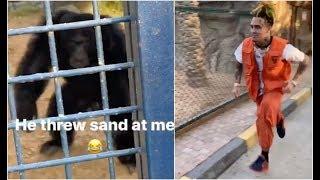 Ape Throws Sand At Lil Pump At Dubai Zoo