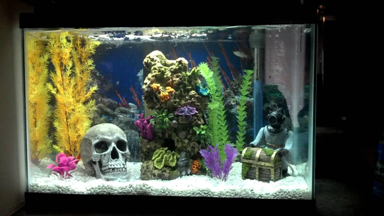Coolest Fish Tank Ever