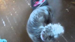 Sydney An Adoptable Border/norwich Terrier Mix In Portland Oregon