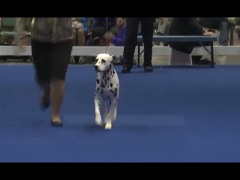 AKC / Eukanuba National Championship Sunday Night - Best in Show
