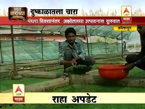 AZOLLA cultivation for cattle feed 360p