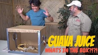 What's In the Box Challenge Prehistoric Edition
