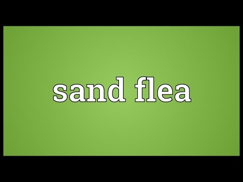 Sand flea Meaning