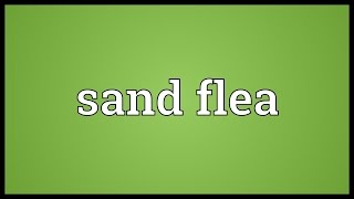 Sand flea Meaning
