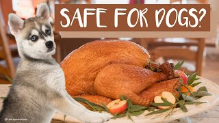 Alaskan Klee Kai: Can My Dog Eat Thanksgiving Day Turkey?