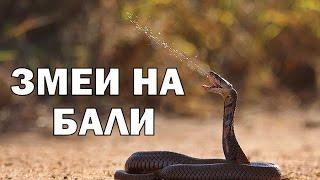 Вкусные змеи на о.Бали!
