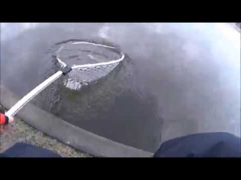 Forellenangeln/German Spoon Competition bei Wild Bijzondervissen in Holland