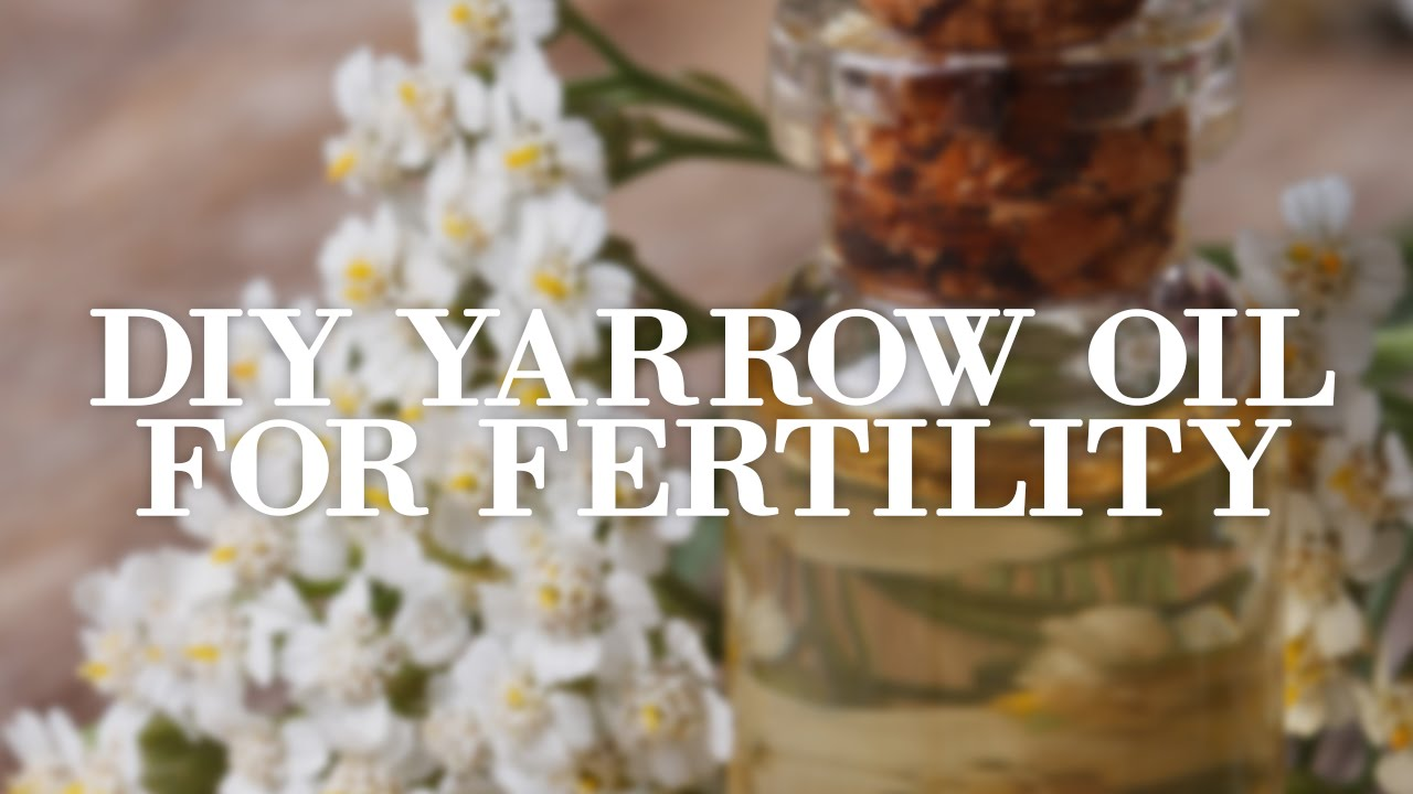 Yarrow: Ancient Fertility Herb in Your Backyard