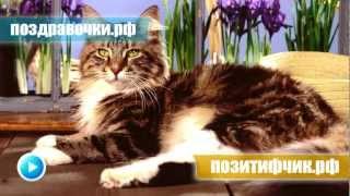 Мяучило - громкое мяукание кота, прикол над питомцем