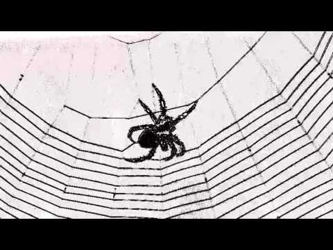 Spider weaving web - web music - the ultimate string player