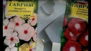 Катарантус - цветок, который восхищает своими необычными и яркими соцветиями! Размножаем семенами..