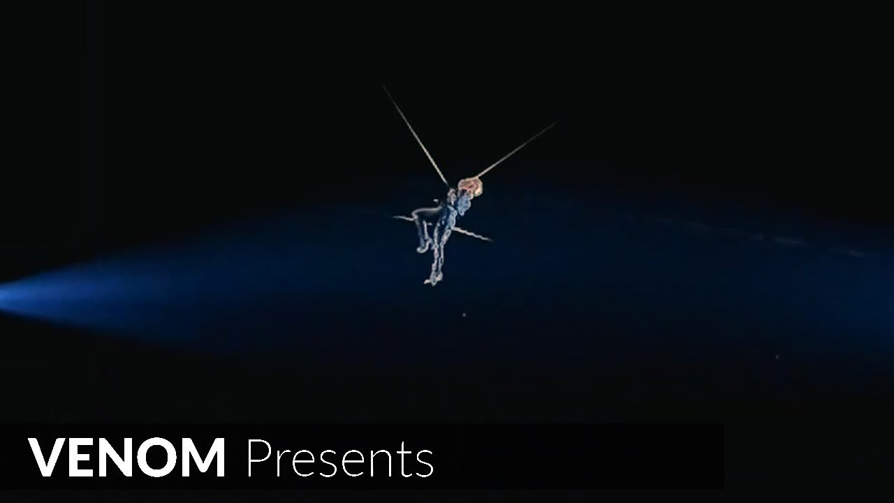 Download P!NK - So What (Beautiful Trauma Tour Live 2019) (Flying through the audience)