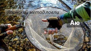 Реки 大甲溪, 油罗溪. Ловля японской корюшки Аю (香魚) на горных реках. 2017/05