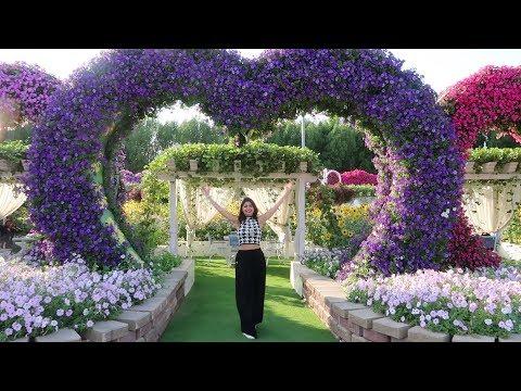 Dubai Miracle Garden Has Over 60 Million Mega Flowers | Curly Tales