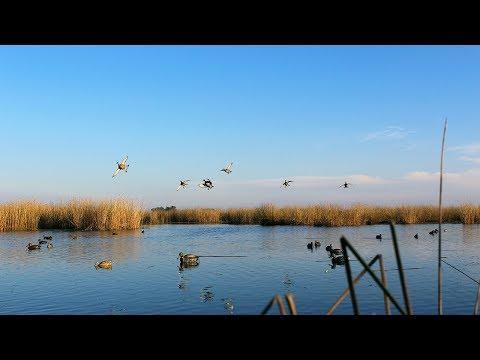 ARGENHUNTS™ Duck Hunting In Argentina #2
