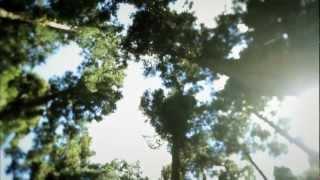 """""""Pour des Prunes"""" -  Audrey Dardenne clip officiel"""