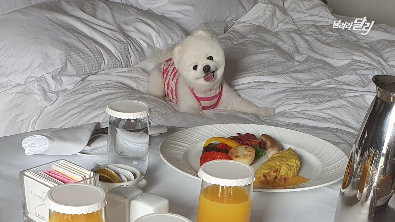 9살쯤 되니까 강아지 놀이터 가는 것보다 힐튼호텔 가서 쉬는게 좋더라고~😎
