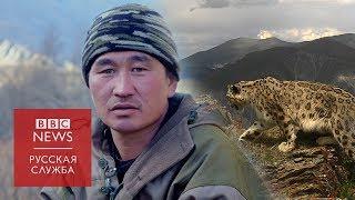 Кот на миллион: как охотники стали хранителями снежного барса на Алтае