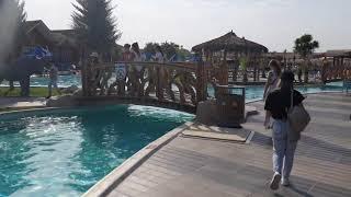 Albatros Jungle Aqua Park 4 Обзор отеля территории номеров Октябрь 2021