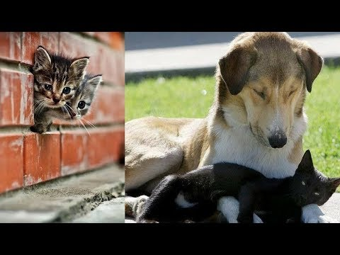 Cutes cats| Cutest dog & cat in the world | Cute dogs clips #15
