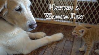 Having a Waffle Day