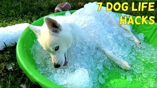 Repeat youtube video 7 Simple Life Hacks for Your Dog