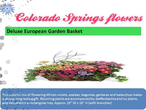 Colorado Spring Go Flower Shops