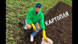 Як Ірина Федишин картоплю саджала :)