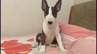 Дрессировка щенка. Важность умственной нагрузки для собаки