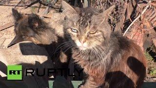 Житель Донецка подкармливает оставленных беженцами домашних животных