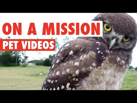 Pets On A Mission || Funny Animal Compilation