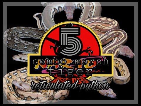 Combo Morph Reticulated Python