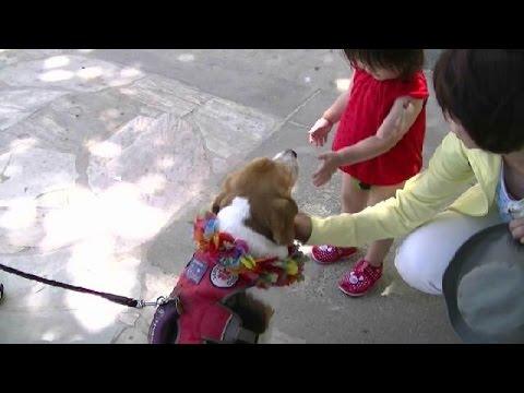 2015ハワイ・オアフ島子連れ家族旅行18・カラカウア通りでの賢いわんちゃんとの出会い