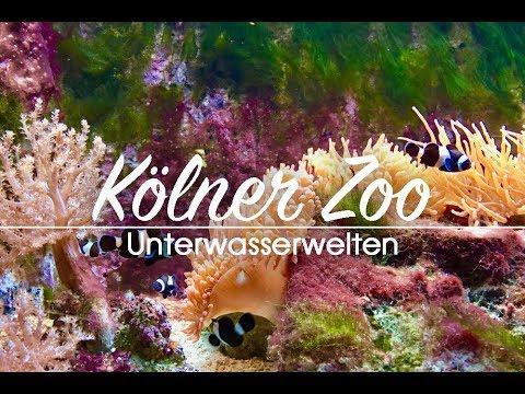 Aquarium Kölner Zoo