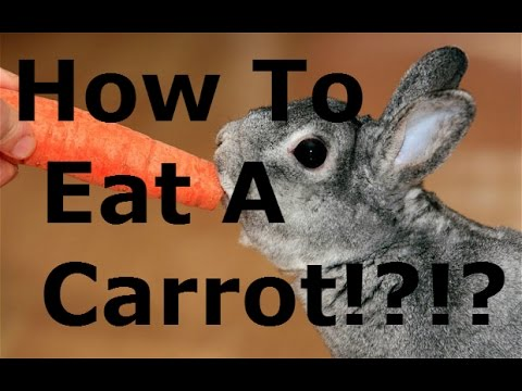 How to Eat A Carrot!|Beckito Reacts Ep.9