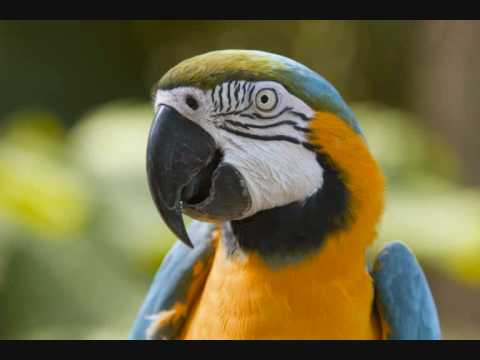 Rainforest Animals - YouTube