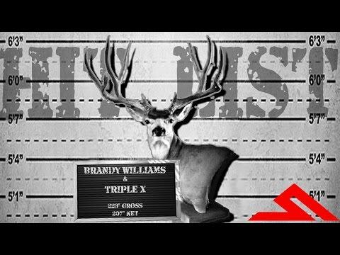 HITLIST: BRANDY WILLIAMS