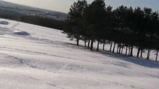 Skis Vs Border Terrier In Bolton Uk