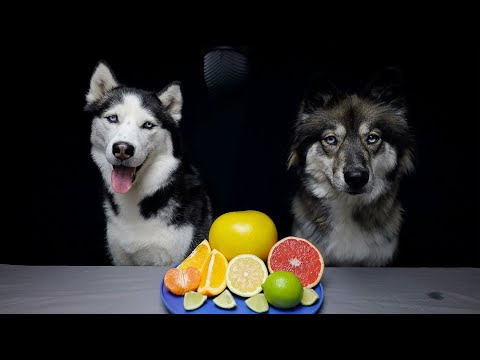 Huskies Review Citrus Fruits!