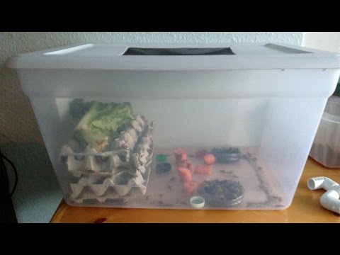 Easy Cricket Farming For Food And Feed
