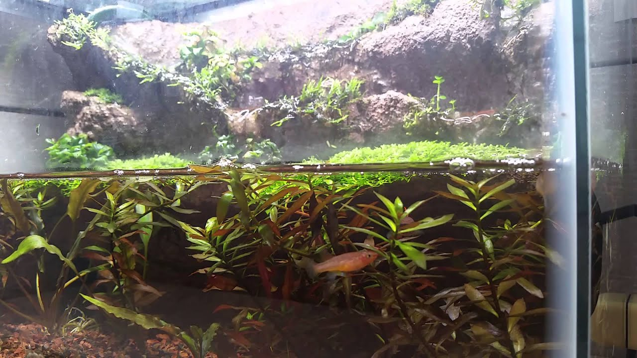 10 gallon paludarium 1 - YouTube 10 Gallon Paludarium