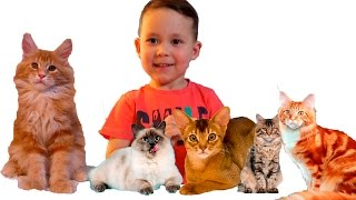 ПРО КОШЕК Выбираем котенка на выставке кошек Новый ПИТОМЕЦ